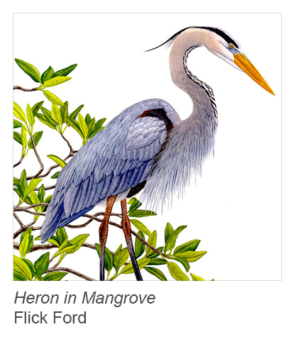 """Heron in Mangrove"" by Flick Ford"
