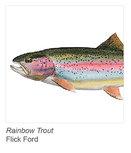"""Rainbow Trout"" by Flick Ford"